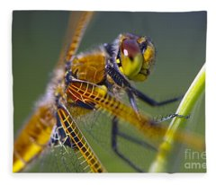 Four Spotted Chaser Fleece Blanket