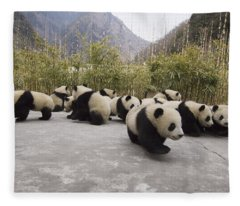 Giant Panda Cubs Wolong China Fleece Blanket