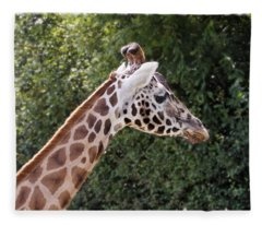 Giraffe 01 Fleece Blanket