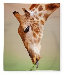 Giraffe Eating Close-up Fleece Blanket
