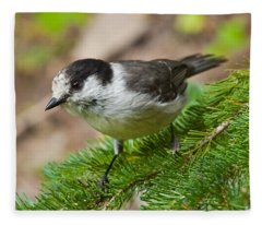 Gray Jay On Fir Tree Fleece Blanket
