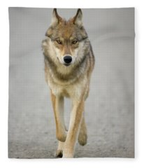 Gray Wolf Denali National Park Alaska Fleece Blanket