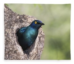 Greater Blue-eared Glossy-starling Fleece Blanket