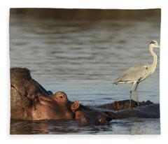 Grey Heron On Hippopotamus Kruger Np Fleece Blanket