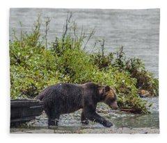 Grizzly Bear Late September 4 Fleece Blanket