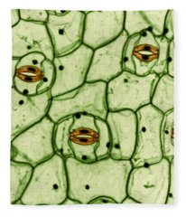 Guard Cells And Stomates In Spiderwort Fleece Blanket