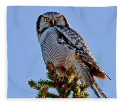 Hawk Owl Square Fleece Blanket