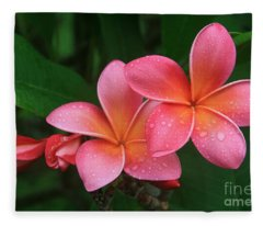 He Pua Laha Ole Hau Oli Hau Oli Oli Pua Melia Hae Maui Hawaii Tropical Plumeria Fleece Blanket