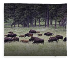 Herd Of American Buffalo Or Bison In Custer State Park Fleece Blanket