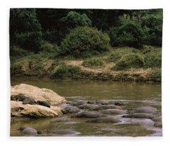 Herd Of Hippopotamus Hippopotamus Fleece Blanket