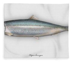 Herring  Clupea Harengus - Hareng - Arenque - Silakka - Aringa - Seafood Art Fleece Blanket