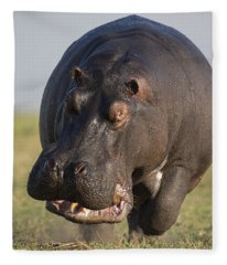 Hippopotamus Bull Charging Botswana Fleece Blanket