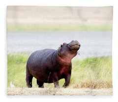 Hippopotamus Hippopotamus Amphibius Fleece Blanket