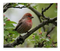 House Finch In Apple Tree Fleece Blanket