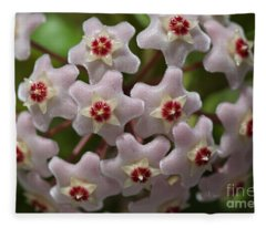 Hoya Waxflower Fleece Blanket