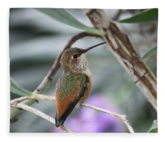 Hummingbird On A Branch Fleece Blanket