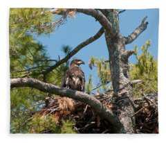 Immature Bald Eagle Fleece Blanket