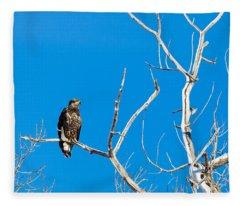 Immature Bald Eagle Fleece Blanket
