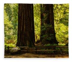 Impressions Of Muir Woods California Fleece Blanket