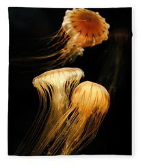Jellyfish Trio Floating Against A Black Fleece Blanket