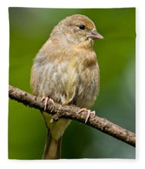 Juvenile American Goldfinch Fleece Blanket