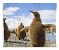 King Penguin Chicks South Georgia Island Fleece Blanket
