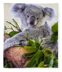 Koala On Top Of A Tree Fleece Blanket