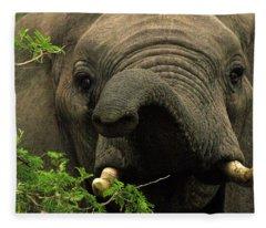 Kruger National Park, Sa - November 29 Fleece Blanket