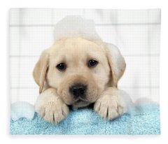 Labrador Puppy In Bath Fleece Blanket