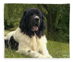 Landseer Dog Fleece Blanket