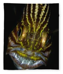 Large-toothed Cardinalfish Brooding Fleece Blanket