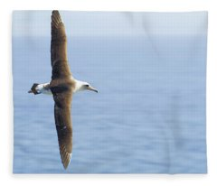 Laysan Albatross No 1 - Kilauea - Kauai - Hawaii Fleece Blanket
