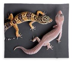 Leopard Gecko E. Macularius Collection Fleece Blanket