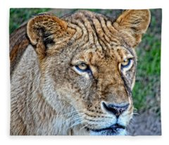 Lioness Deep In Thought Hdr Fleece Blanket