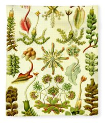 Liverworts Moss Brunnenlebermoos Haeckel Hepaticae Fleece Blanket