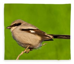 Loggerhead Shrike Fleece Blanket