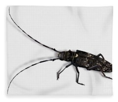 Long-hornded Wood Boring Beetle Monochamus Sartor - Coleoptere Monochame Tailleur - Fleece Blanket