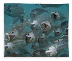 Long-jawed Mackerel Foraging Red Sea Fleece Blanket