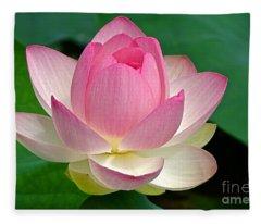 Lotus 7152010 Fleece Blanket
