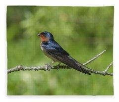 Male Barn Swallow Hirundo Rustica Dsb262 Fleece Blanket