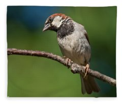 Male House Sparrow Perched In A Tree Fleece Blanket