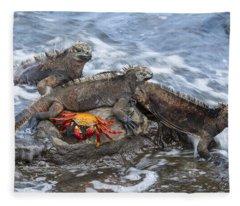 Marine Iguana Trio And Sally Lightfoot Fleece Blanket
