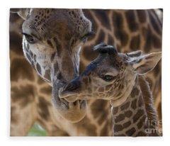 Masai Giraffe And Calf Fleece Blanket