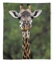 Masai Giraffe Serengeti Np Fleece Blanket