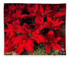 Merry Scarlet Poinsettias Christmas Star Fleece Blanket