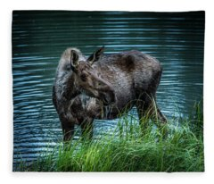 Moose In The Water Fleece Blanket
