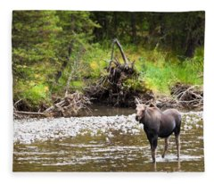 Moose In Yellowstone National Park   Fleece Blanket