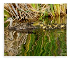Mottled Duck And Young Fleece Blanket