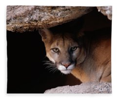 Mountain Lion Peering From Cave Fleece Blanket