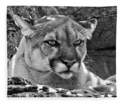 Mountain Lion Bergen County Zoo Fleece Blanket